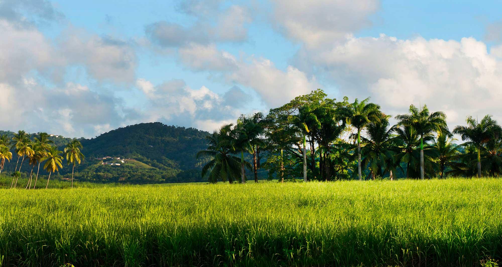 Rivière-Salée - Commune de Martinique