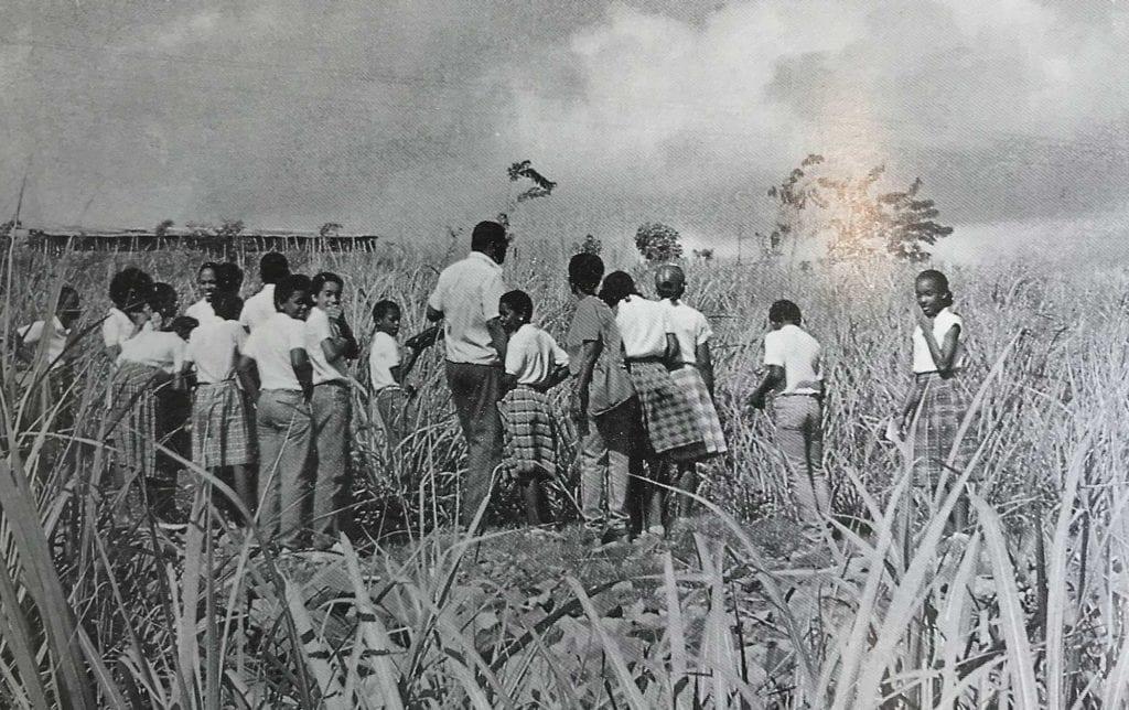Visite chez un agriculteur en Martinique