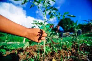 Rivière-Salée - Commune de Martinique - ville de l'agriculture de demain
