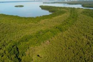 Images aériennes de la mangrove - Rivière-Salée